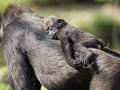 Die 10 niedlichsten Affen der Welt