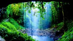 ethereal forests - Google Search