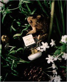 """Série """"Science Naturelle"""" dans le spécial beauté du M 18/04/2015. Photos Joss McKinley, fleurs Pierre Banchereau. Coordination beauté Lili Barbery-Coulon"""