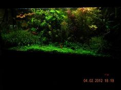 Aviseg's Planted Tanks Photo (ID 37981) - Full Version | RateMyFishTank.com