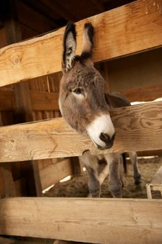 Donkeys in your barn is Heavenly!~