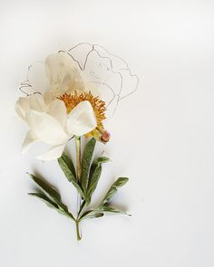 botanical drawing no 6007 by kariherer on Etsy