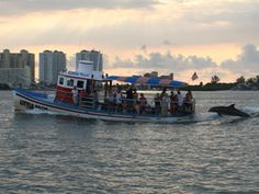 Dolphin Sightings on Little Toot Boat Tour in Clearwater, Florida