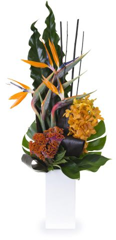 COR001 Tall Corporate Flowers, Modern, Plants, Trendy Tree, Plant, Planets