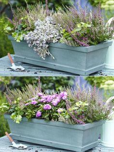 Den Balkonkasten müssen wir noch lange nicht in sein Winterquartier schicken, stattdessen bepflanzen wir ihn mit wunderschönen herbsttauglichen Pflanzen.