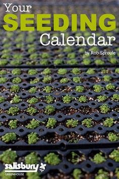 Your #Seeding Calendar - A cheat-sheet of when and how to plant the most common edibles' seeds. By Rob Sproule, Salisbury Greenhouse