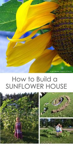 Create a Sunflower House for Kids - Creative Gardening with Children *We are so making this sunflower fort in the yard this summer. How cool!