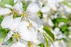 Stefanodav's Shot-Blog: Sunbathing... #white #flower #iamnikon #stefanodav