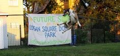 #LoganSquare #DogPark Close to Reality