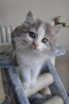 Want more Cute Cat Photos? Check out our website by clicking the photo Cool Cats, I Love Cats, Crazy Cats, Cute Kittens, Ragdoll Kittens, Tabby Cats, Bengal Cats, Animals And Pets, Baby Animals