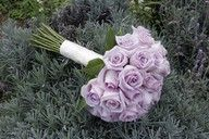 sterling roses - one of my favorite flowers