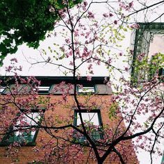 Greenwich Village Flat. Spring in New York City