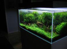 "askarjepon: ""Amazing tank with all those greens. Tank by Kim Pulkki. #aquascaping #aquarium #aquariumcreation #plantedtanks #plantedtank #minimal #design #aquarioplantado #natureaquarium #instagood #foundonline #inspiring #fish #aquaplants #rareplants #ornamentalshrimp #shrimp #picoftheday"" by @aquariumcreation on Instagram http://ift.tt/1Sri0ei"
