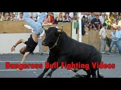 Very Funny videos 2017 Bull Fights