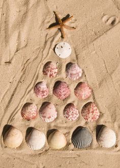 Shell Christmas Tree in Sand : heathervonbargen - flickr  #Christmas