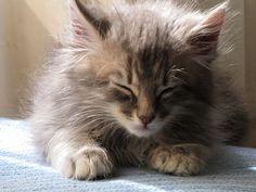 sleepy...  うとうと…