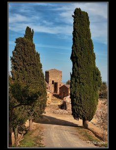 Tuscany - Montepulciano, Siena,,Tuscany
