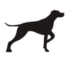 behang hond zwart wit - Google zoeken