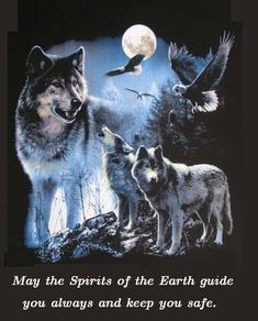 Post your favorite wolf pictures here. - Page 4 Native American Wolf, Native American Quotes, American Women, Animal Spirit Guides, Wolf Spirit Animal, Wolf Images, Wolf Pictures, Beautiful Creatures, Animals Beautiful