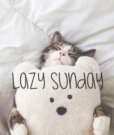 Lazy Sunday - Watzijzegt.com