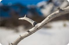 Textured twig, focusing on the details of nature's beauty in the Blow Me Down Mountains, Newfoundland.