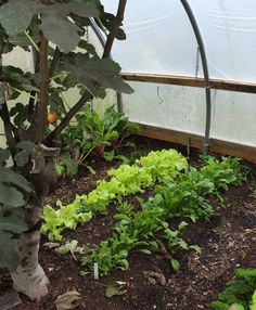 Efficiency tips and tricks in the garden - long list submitted by High Mowing Organic Seed customers Greenhouse Benches, All About Plants, Organic Seeds, Grow Your Own Food, Vegetable Garden, Gardening Tips, Canning, Flowers, Bed
