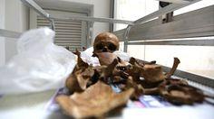 Conheça a história da primeira equipe antropológica forense da América Latina, que identificou centenas de ossadas jogadas em valas comuns durante o regime militar do país