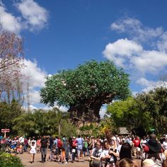 Animal Kingdom, Disney World, Orlando (opening day)