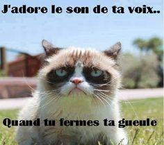 Photos photo drole pour commentaire facebook