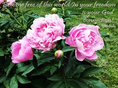 Spiritual Awakening Quotes, Flowers, Royal Icing Flowers, Flower, Florals, Floral, Blossoms