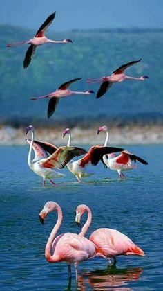 Flamingo by Ada Dalilah Pretty Birds, Beautiful Birds, Animals Beautiful, Animals And Pets, Baby Animals, Cute Animals, Exotic Birds, Colorful Birds, Flamingo Photo
