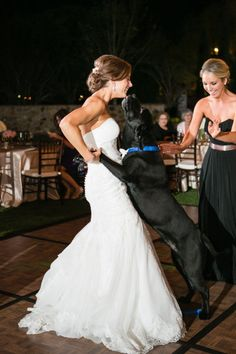 love my dogs. they need to be a part of my wedding in one way or another and would love a picture like this