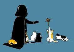 Using the force with kittens, definitely what I would do