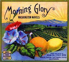 Pomona Meteor Flowers Orange Lemon Crate Label Print