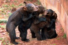 I would guess this was taken at Bear Country, USA in Rapid City South Dakota. I took a similar photo myself there. The baby bears are adorable!