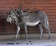 Google Image Result for http://www.anvari.org/db/cols/Photoshopped_Animals/Photoshopped_Animal_04.jpg