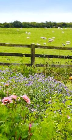 Garden Along Fence Line Country Fences, Country Farm, Country Life, Country Living, Country Roads, Cidades Do Interior, Beautiful Places, Beautiful Pictures, Country Crafts