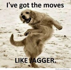 I've Got The Moves Like Jagger - Every time I hear this song I picture this dog!