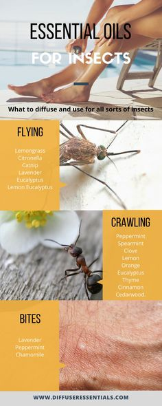 What essential oils to diffuse for insects