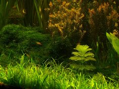 A tree by the edge of the forest. Underwater Aquascape