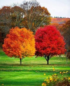 """""""Nature showing that ALL things are unique. even when planted at the same time and the same place. 💛❤️ Thanks for the beautiful inspiration…"""" Beautiful World, Beautiful Places, Beautiful Pictures, Fall Pictures, Nature Pictures, Jardim Natural, Autumn Scenes, Colorful Trees, Plantation"""