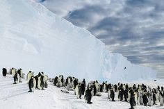 Descending to the Emperor Penguins Photo by Michal Krzysztofowicz — National Geographic Your Shot