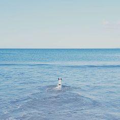 I'm going on an adventure! Pipi the precious fox terrier. #foxterrier #dog #pet #cute #walk #exercise #beachwalk #swim #summer #blogger #blog #femenish (scheduled via http://www.tailwindapp.com?utm_source=pinterest&utm_medium=twpin)