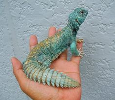 via Mermaid Melissa Facebook (Not sure what it is, except for being a lizard/reptile) From Australia