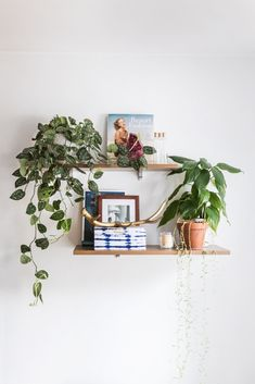 The Essential Houseplants Every Domino Reader Has in Their Home