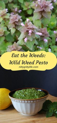 Nutritious and flavorful wild weed pesto can be served over fish, chicken or pasta -- and is amazing with goat cheese to top flatbreads!