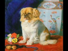 Pekingese Puppy Care --- http://www.webnub.com/pekingese The Pekingese is decidedly not a sissy lap dog. She is a courageous character that will not start a ...