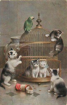 papağan kafesinde beş kedi iki