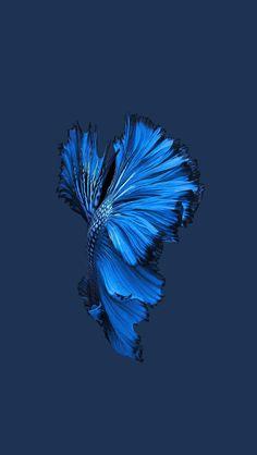 apple ios9 fish live background dark blue iphone 6 plus