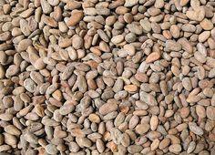 75 CACAO: Granos de cacao en la fábrica de chocolate Barry Callebaut, en Bélgica. La primera remesa se vendió por primera vez al público a mediados de 1800 en Gran Bretaña por John Cadbury, que desarrolló un proceso de emulsificación para hacer chocolate sólido.